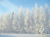 winter-2683845_1920